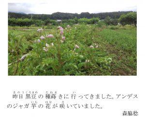 アンデスの花(はな)