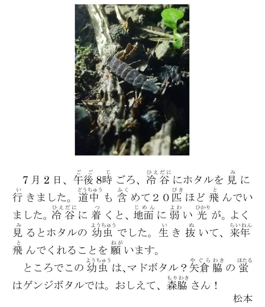 根(ね)古川(こがわ)ホタルの幼虫(ようちゅう)